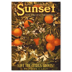 Citrus Groves Personalized Greeting Cards